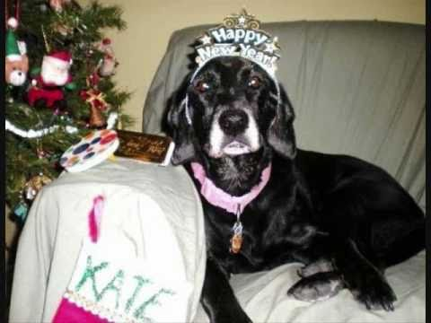 Happy New Year 2011 from Kate The Lovable Lab 