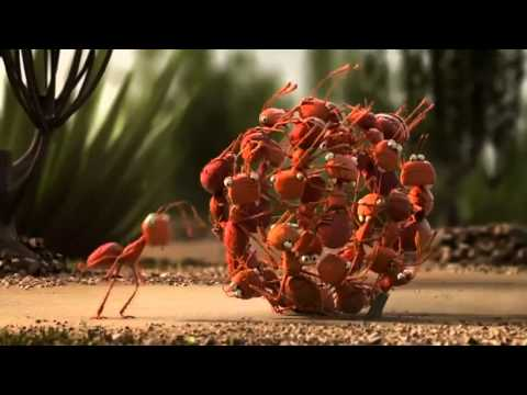 Smart To Travel In Groups(Funny Penguins, Ants & Crabs) Video.