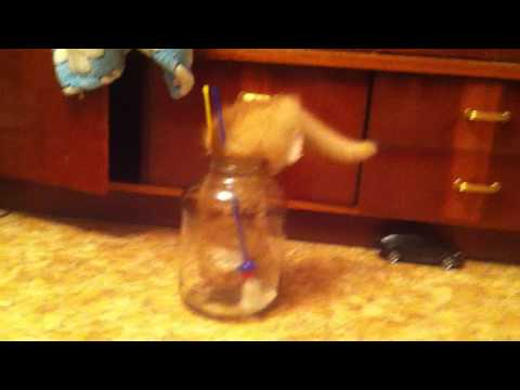Kitten gets itself stuck in a jar