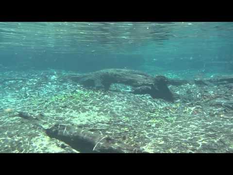 Snorkeling at Rio da Prata # 280 Brazil
