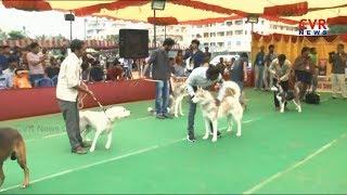 విశాఖలో డాగ్ షో అదుర్స్ | 3rd National Open Dog Show in Visakhapatnam | CVR NEWS - CVRNEWSOFFICIAL