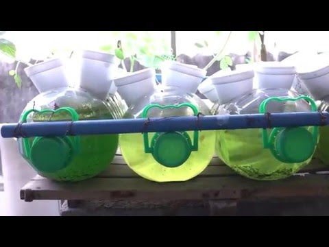 Hydroponic Vegetable Gardens in Taguig City