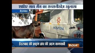 Ambulance used to steal cattle held in Hyderabad - INDIATV