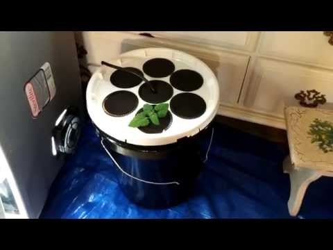 Easiest DIY Aeroponics Cloner Ever! (No PVC)