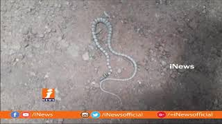 Sri Lankan Flying Snake Found In Nallamala Forest | Srisailam | iNews - INEWS