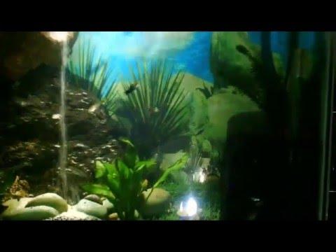 Air Terjun dalam Akuarium