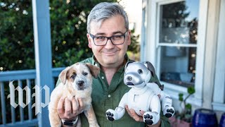 Sony's robot dog Aibo vs. a real puppy - WASHINGTONPOST