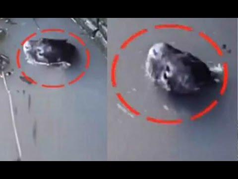 Animais Raros & Estranhos / Strange Animals