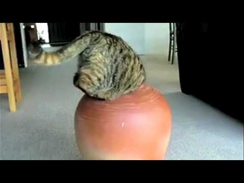 Supercats Episode 2 — Moar Hilarious Cat Videos