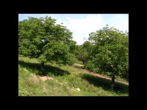 Despre shemele de plantare ale nucului