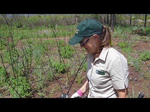 Metal Detecting: Colleen Cleans up the WW2 Hospital: Garrett AT Gold.
