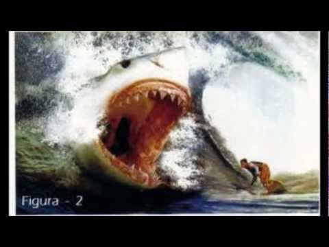 tubarão,megalodon e outros