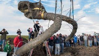 Farmer uncovers 11,000-year-old mammoth - CNN
