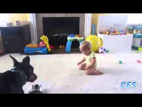 Cachorros Amam Bebês!
