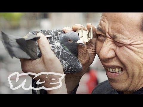 China's Millionaire Pigeon Racers 2013 documentary movie play to watch stream online