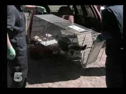 News:  Rabid Cat