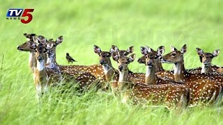 Deer Hunters in Nalgonda | Spotted deer found dead : TV5 News - TV5NEWSCHANNEL
