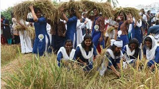 Kochi: College students turn farmers for a day, harvest organic paddy crop - TIMESOFINDIACHANNEL