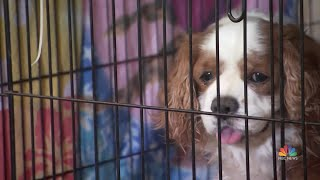 Volunteers Care For Pets Separated From Families After Devastating Camp Fire | NBC Nightly News - NBCNEWS
