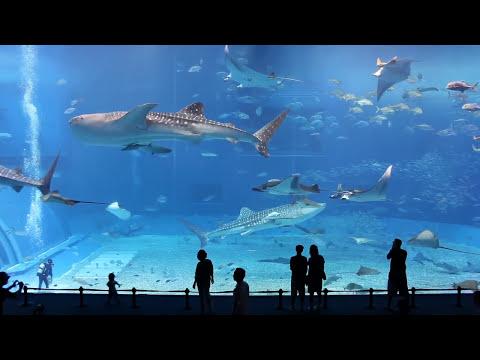 Denver Aquarium Printable Coupons