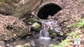 Râul Bâc – în prag de catastrofă ecologică