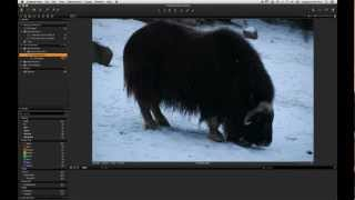 Organising the Catalog in Capture One Express 7 | Phase One