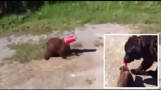 شاهد بالفيديو .. كيف ساعد كلب قطة في الخروج من مأزقها
