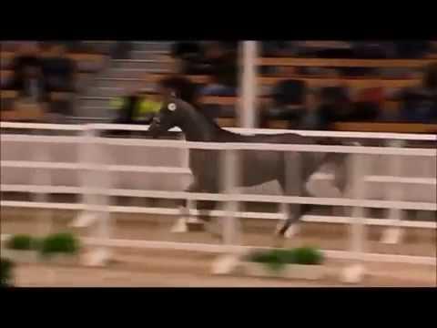 SIR OBOLENSKY Z: stallion Stakkato Gold x Cornet Obolensky, www.equine-evolution.com