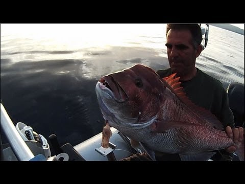 king red snapper-ΑΞΙΖΕ ΤΟ ΨΑΡΕΜΑ.sotos fishing