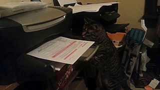 印刷した紙を持ってきてくれる猫。ありがたいんだけど、紙クッシャクシャw