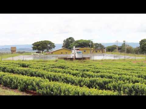 Fazenda Morro Alto - Irrigação Subterrânea de Café