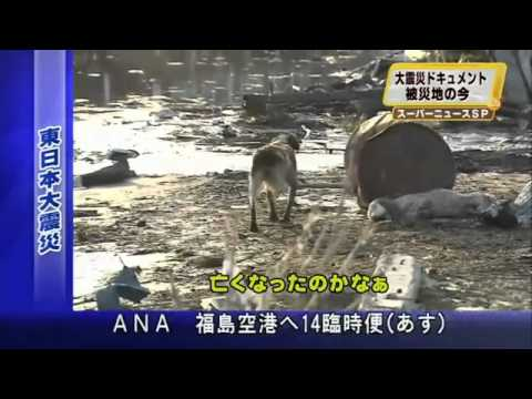 Loyal Dog Won't Leave Injured Friend Behind - HELP JAPAN'S LOST & INJURED TSUNAMI PETS