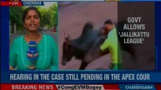Tamil Nadu: Jallikattu set to return as sporting league, hearing in case pending in Apex Court - NEWSXLIVE