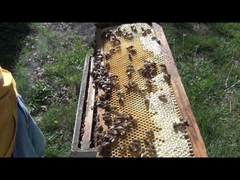 Beekeeping : Will Your Hive Swarm??