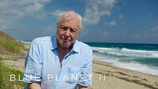 A message from Sir David Attenborough - Blue Planet II: Episode 7 - BBC One - BBC