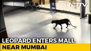 Panic After Leopard Seen At Shopping Mall, Hotel Basement In Thane - NDTV