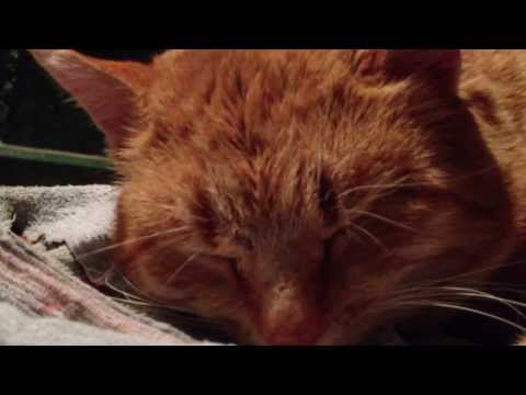 Grandma cat sleeping in Pleven Parts 1