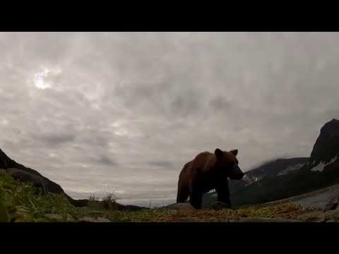 Urso come câmara de filmar GoPro da BBC | Grizzly bear eats BBC's GoPro HD camera