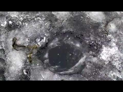 Bagry 2012 grudzień PALIE się łowi spod lodu