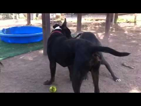 Adoptable dogs Mabel & Rufus playing super cute