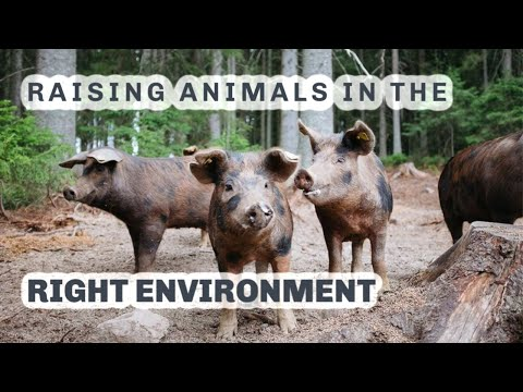 Forest pigs and pastured poultry