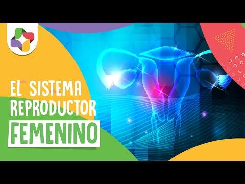 Sistema reproductor femenino - Biología - Educatina