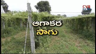 Agakara or Spine gourd successful farming | Planting technique of spine gourd  | Raithe Raju - CVRNEWSOFFICIAL