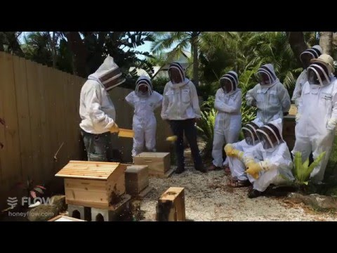 Beginner Beekeeping Ep 4 Part 3 - Installing a package with Michael Bush