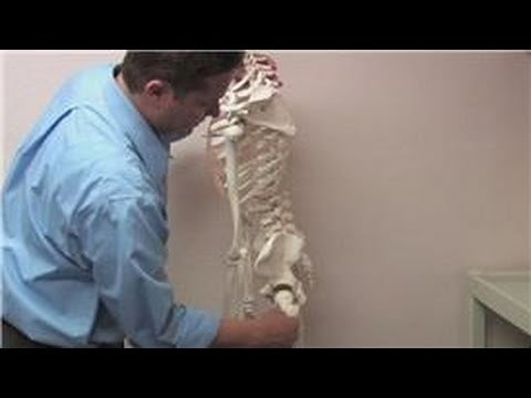 Chiropractic Treatments : How to Unpinch a Sciatic Nerve