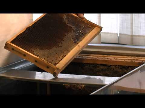 Ο τρύγος του μελιού - Εκπαιδευτικό βίντεο