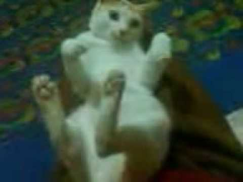 Tamilo my cat (whay he???????)