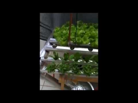 Mini horta hidroponica, sistema NFT. Video 4.