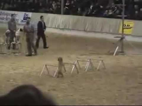 Dogs doing awesome circus tricks