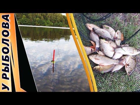 рыбалка 3 свирь карась золотой